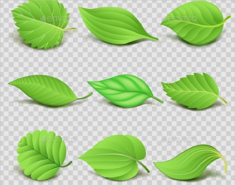 3D Leaf Template