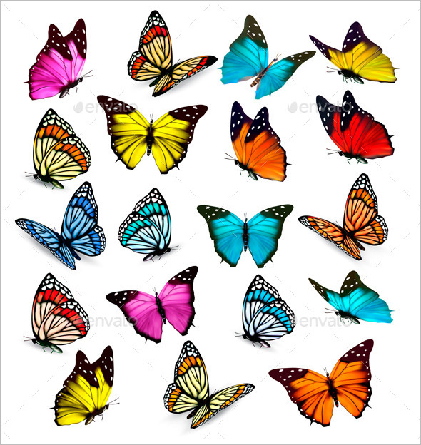 Fully Editable Colorful Butterflies