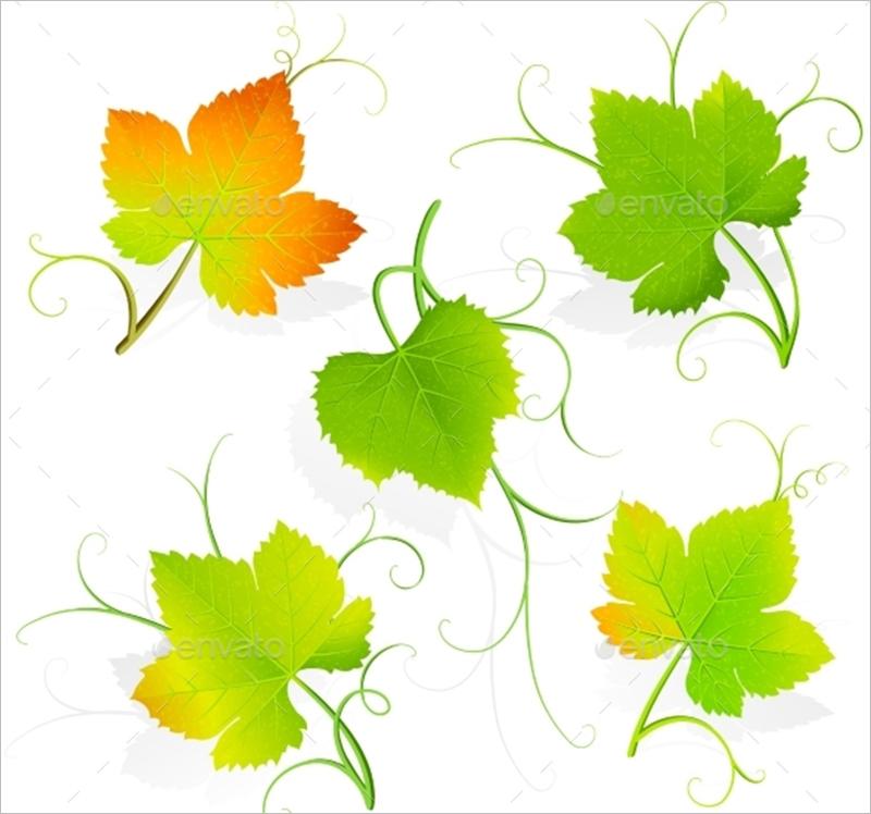 Grape Leaves Vector Template