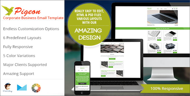 Business Email Template With Color Variations