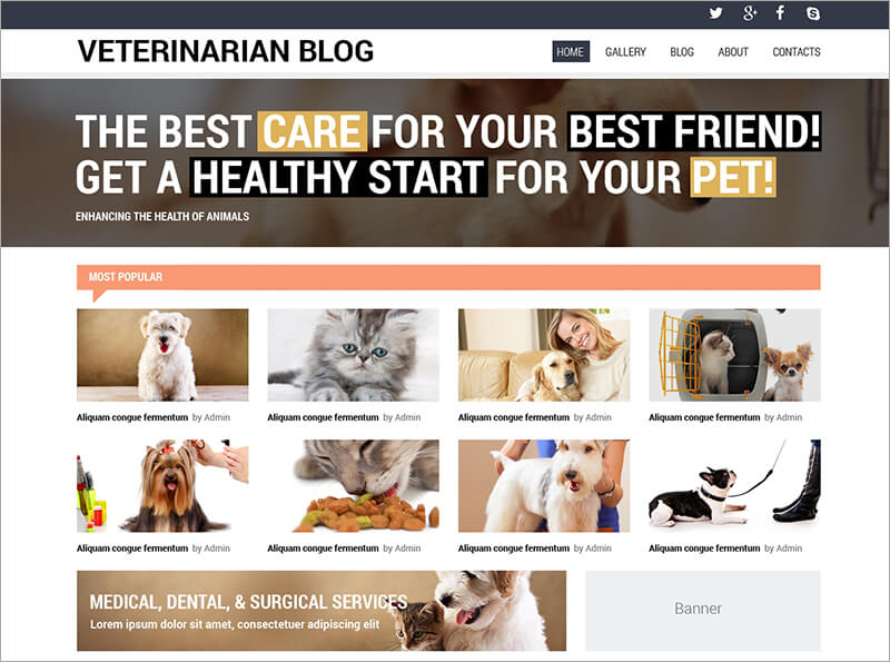 Veterinarian Blog Template