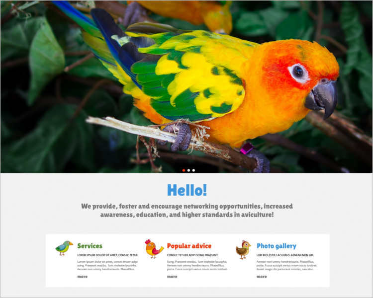 birds-joomla-template