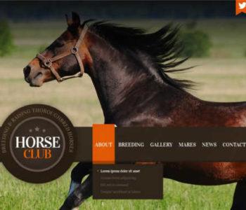 horse-club-joomla-template