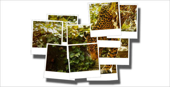 polaroid-zoo-brochure