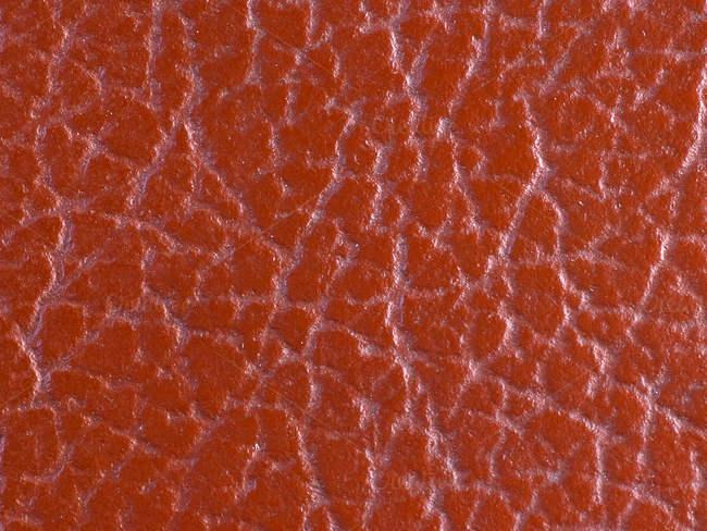 closeup-scale-texture