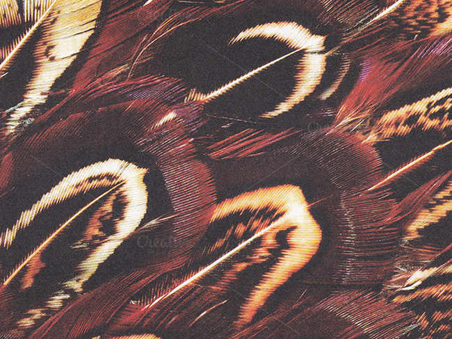 feather-scale-texture