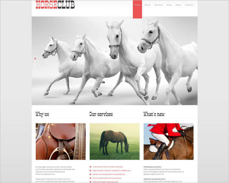 horse-club-wordpress-php-theme-templates