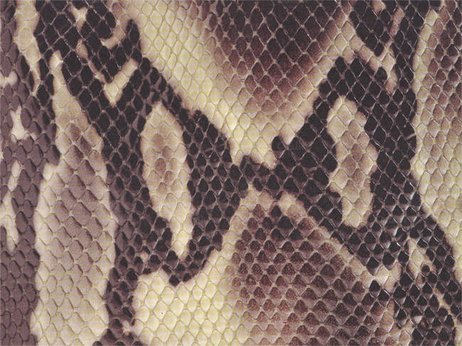 reptile-scaled-texture