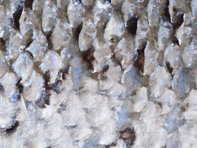 sea-scale-texture
