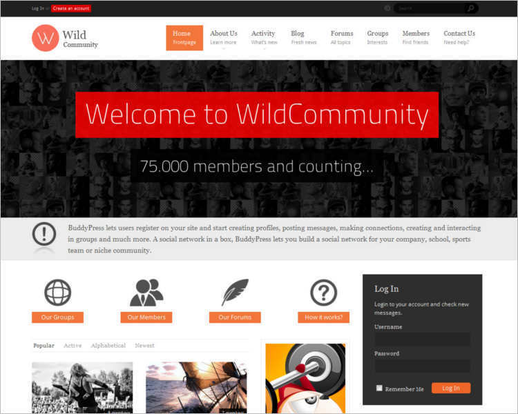e-commerce-buddy-wordpress-templates