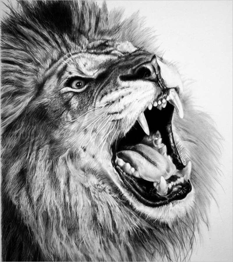 Roaring lion line drawing