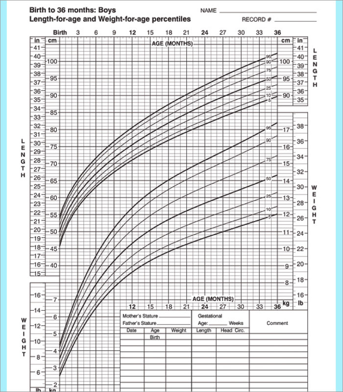 Baby Growth Chart Templates Free Word PDF Format – Word Graph Template