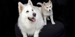 67+ Best WordPress Pet Shop Themes