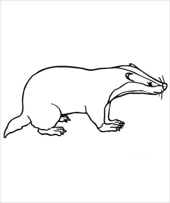 Animal Body Outline Templates