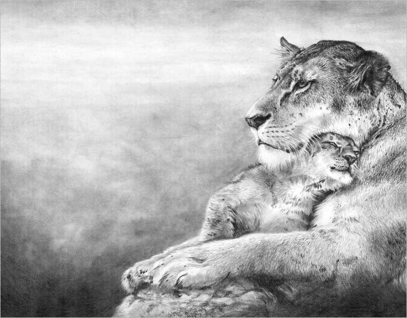 Lion & Baby Lion Drawing Design
