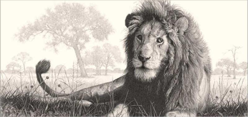 Male Lion Drawing Desing