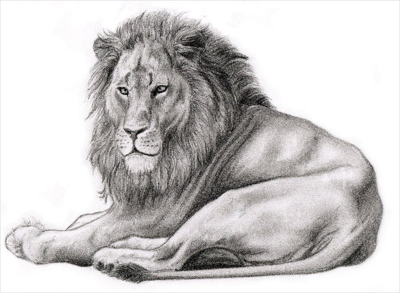 Realistic-Lion-Drawing-For-You