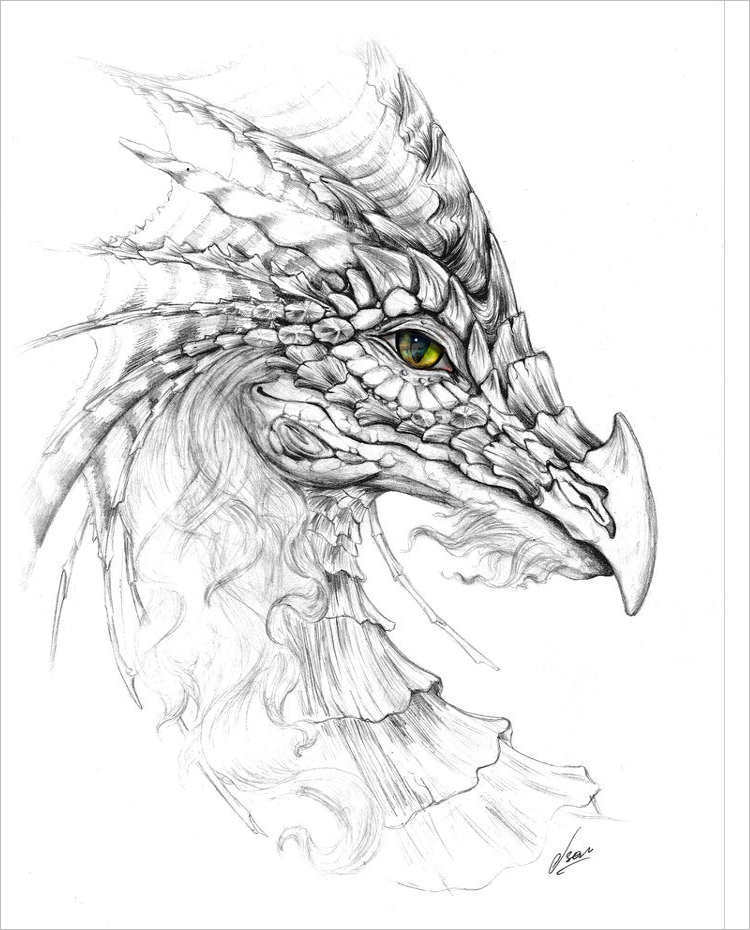 Vintage Dragon drawing Design