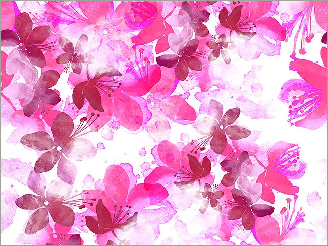 cherry blossoms 12