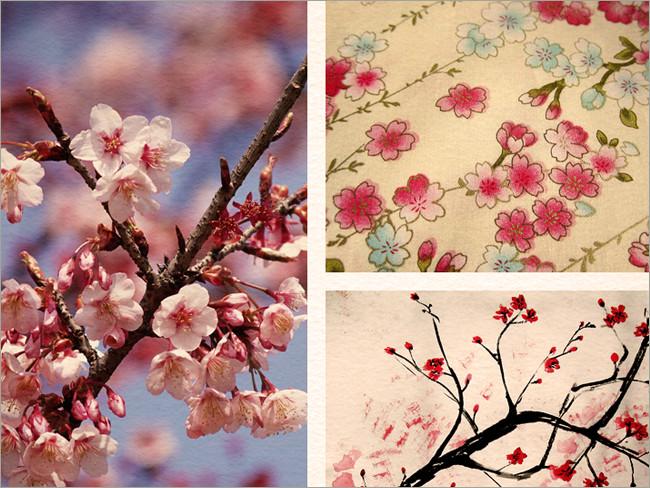 cherry blossoms 24