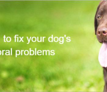 Dog WordPress Themes