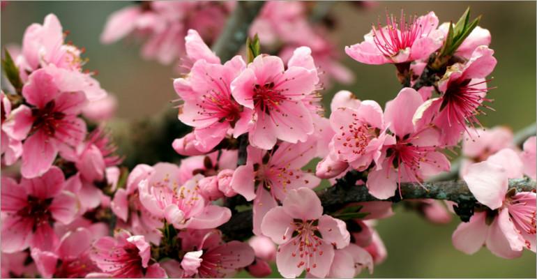 36 Amazing Cherry Blossom Patterns Free Amp Premium