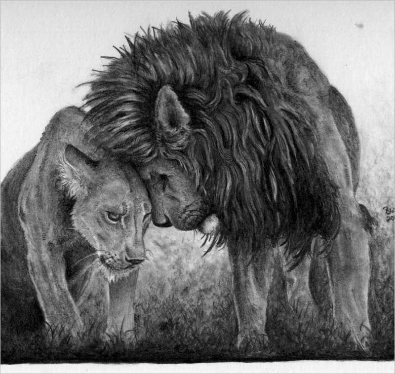 pair Lion Drawing Design