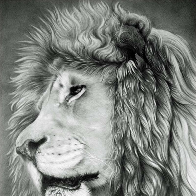 sad Lion Pencil drawinmg design