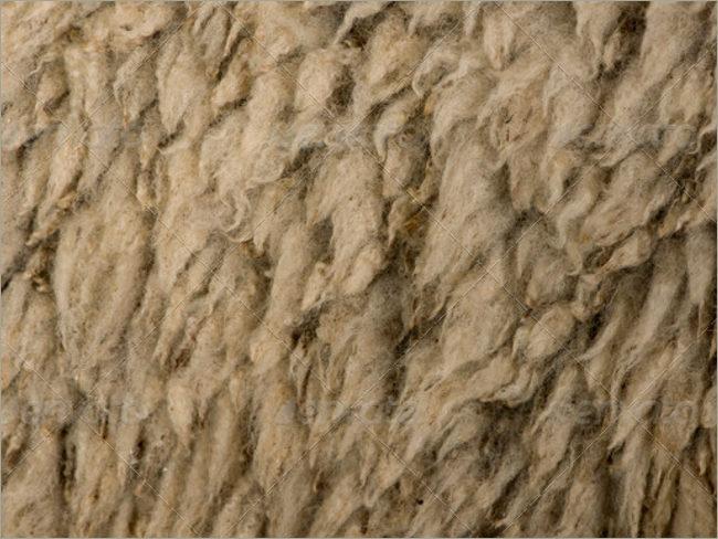 Close up of Sheep Wool