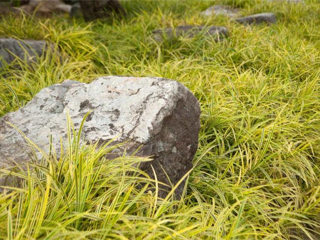 Download Lawn Texture Design