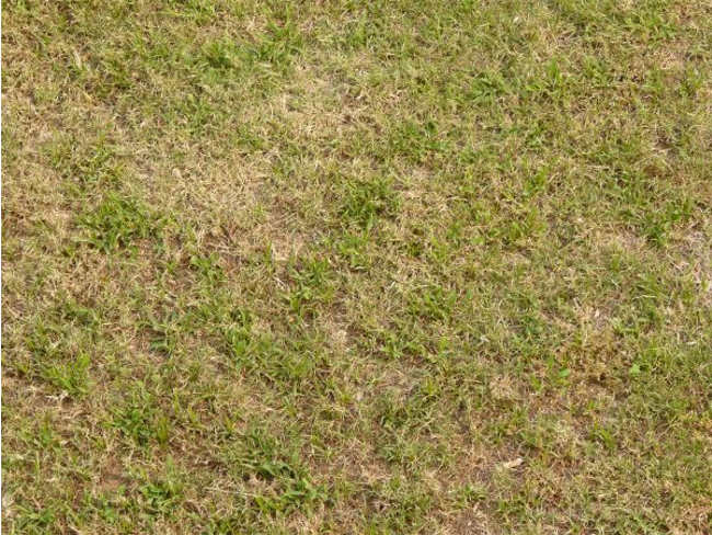Dry Lawn Texture Design