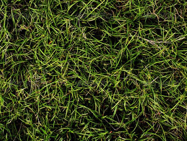 Grass close up texture