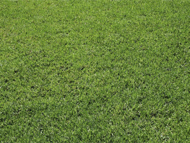 Green Lawn Texture design