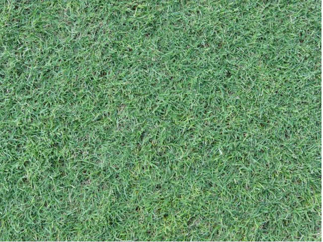 High Quality Lawn Texture Design