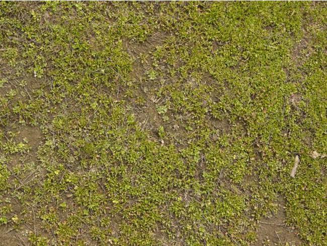 Irregular Short Grass Texture