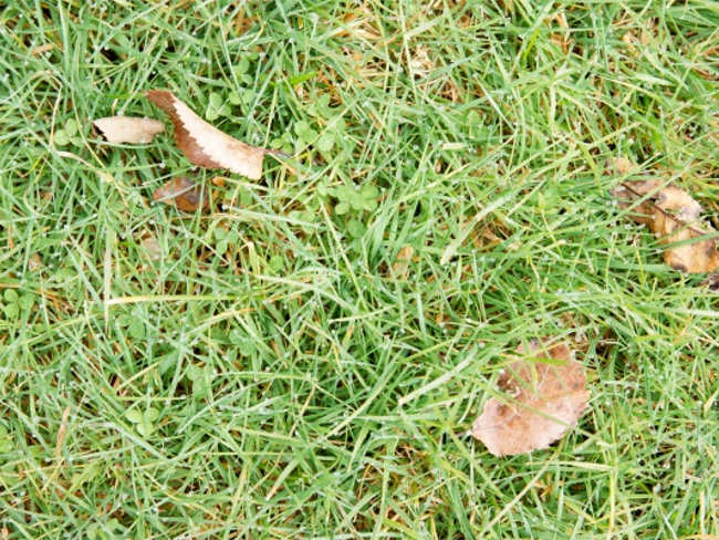 Lawn Ares Texture design