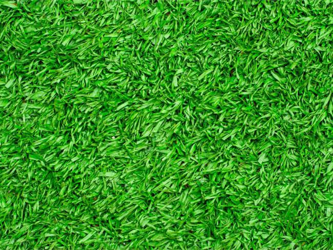 Lawn Grass Texture Design