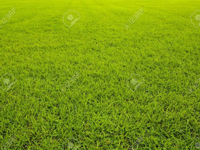 Lawn Making Texture Design