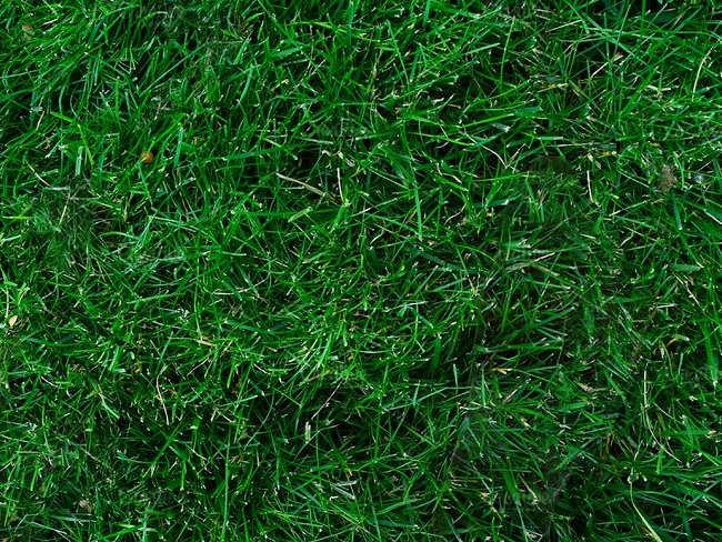 Lawn care Texture Design