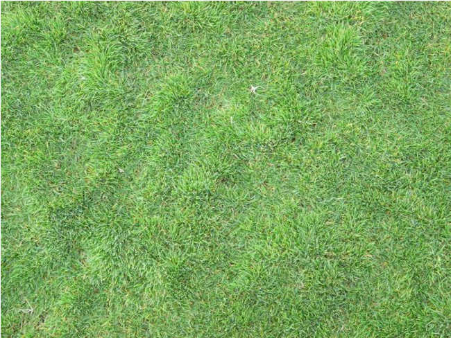 Long Flattened Lawn Texture Design