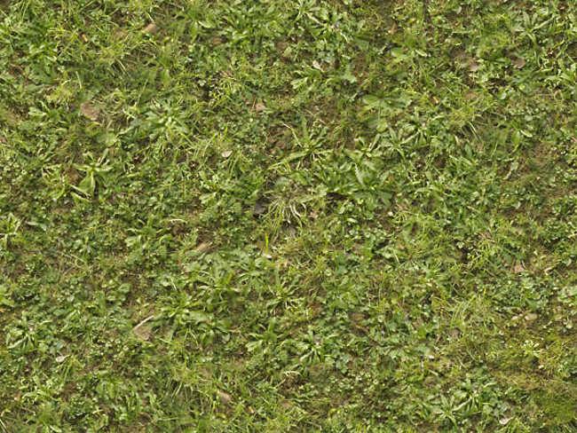 Lush Green Grass Texture Design