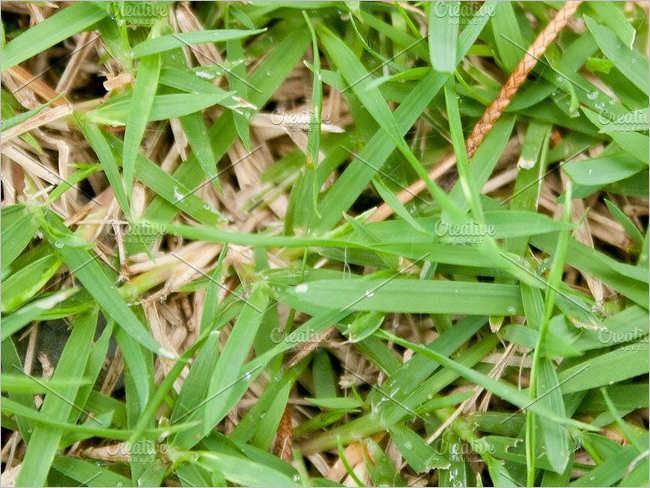 Mowed Lawn Texture Design