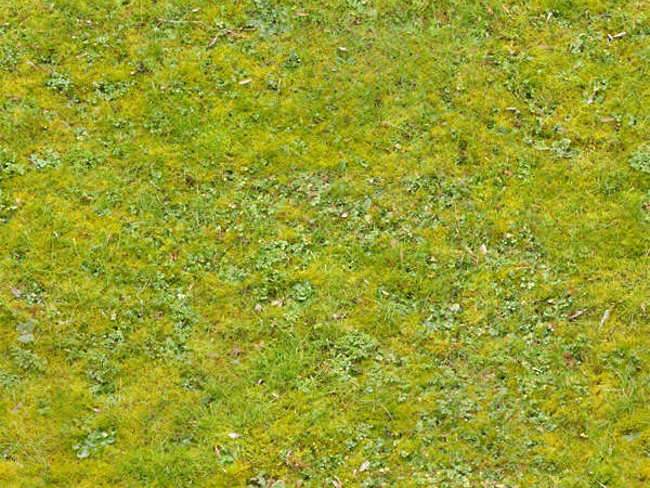 Patchy Grass Lawn Texture Design