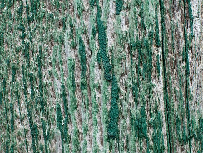 Premium Peeled wood Texture Design