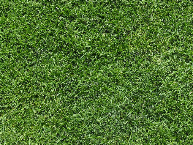 Seamless Lawn Texture Design