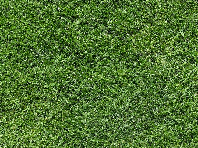 Seamless Lawn Texture Design