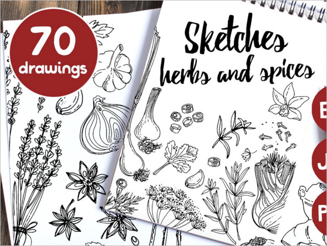 Sket herbs and spices Drawing