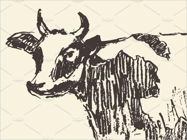 Spotted Cow illustration Drawing