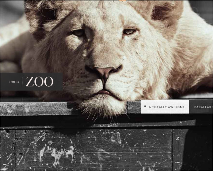 Zoo WordPress Template
