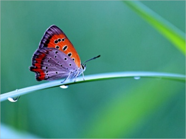 Butterfly HD Free Backgrounds Pictures